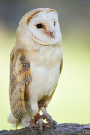 宙メンフクロウのフルボディの肖像画