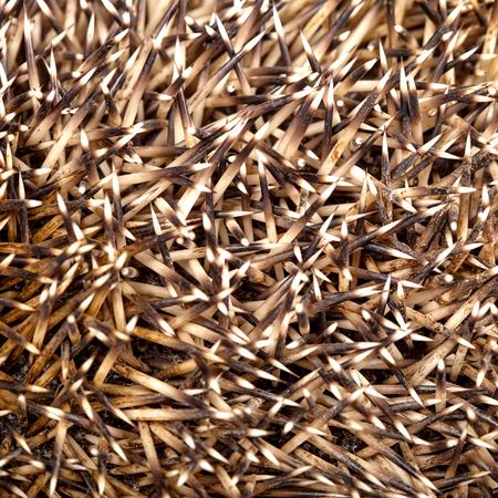 Hedgehog skin needles texture