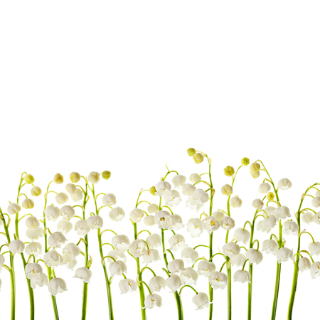 muguet: Lily of the valley white flowers isolated border background