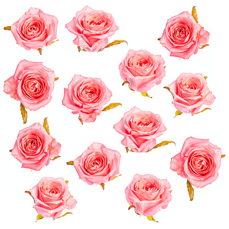Isolated pink roses pattern valentine background Stock Photo