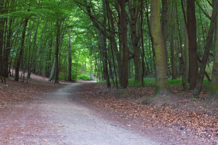 pathway in green forest, nature scenic Stock Photo