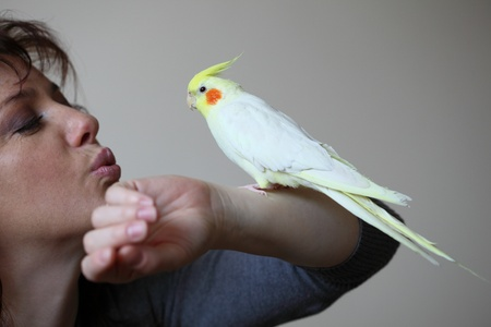 Cheeky Cockatiel parrot and woman Stock Photo