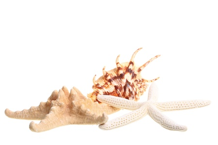 White finger starfish and seashells on white background Stock Photo