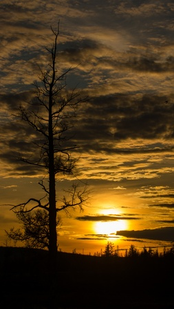 Lonely dry tree against a colourful sunset