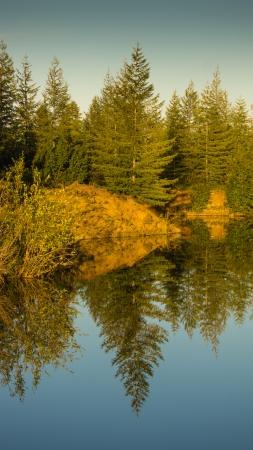reflexion: Paisaje lago de madera con la reflexi�n de �rboles en el agua