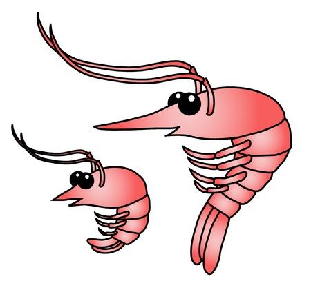 prawns: Shrimp