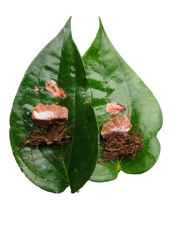 Betel palm and Betel nut or Aareca catechu and Piper Betle Stock Photo