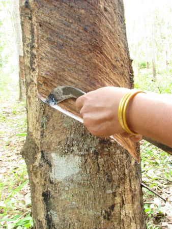 Farmer to tab a rubber tree Stock Photo