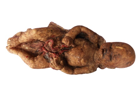 Model rubber of human fetus or embryo Stock Photo - 9138583