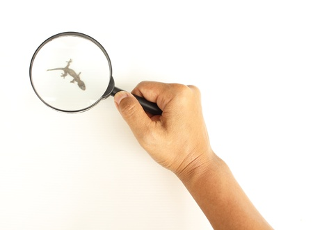 Female hand holding the magnifying glass to see relics house lizard
