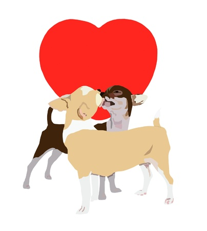 Kissing chihuahua on red heart and white background photo