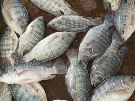 Nile tilapia fishes at Thailand market Stock Photo