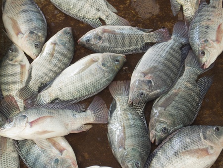 Nile tilapia fishes at Thailand market Stock Photo