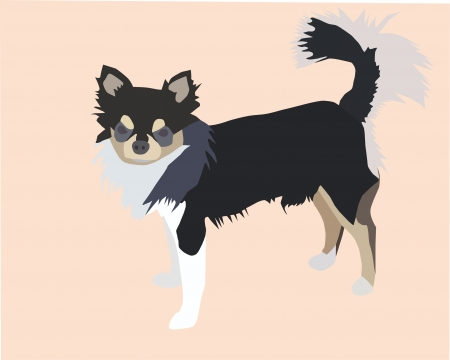 pampered: male long hair chihuahua Illustration