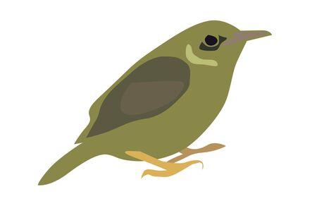 sunbird:  illustration of little olive-backed sunbird