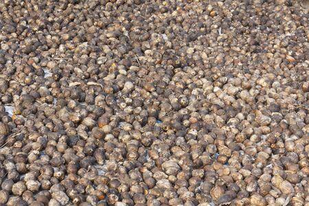 betelnut: Betel or betelnut drying