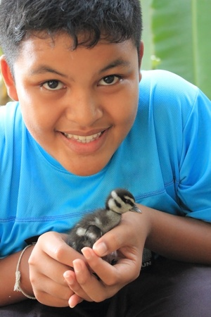 thai boy: Thai boy holding baby teal duck Stock Photo