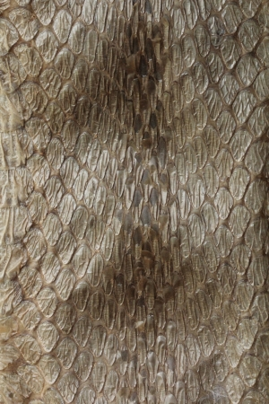 Dry python snake skin background Stock Photo - 17010018