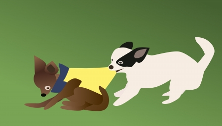 grab: Vector and illustration of chihuahua dog bite grab clothes away
