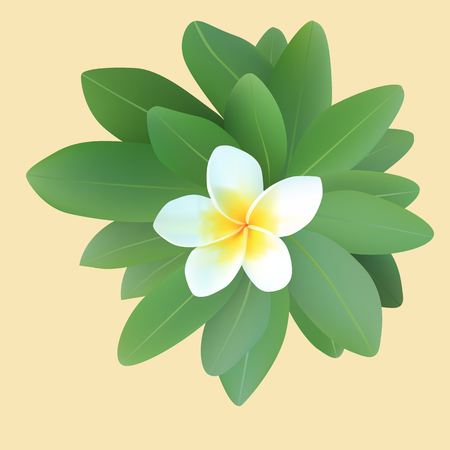 illustration of frangipani plumeria with leaves Vector