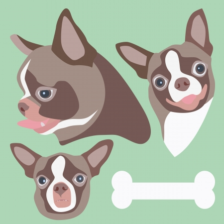Vector and illustration of chihuahua head and bone Vector