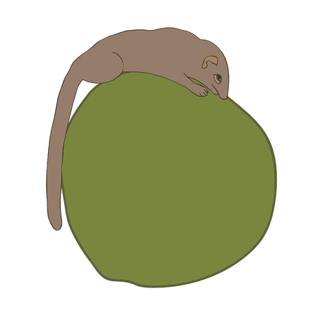 Vector illustration of Common treeshrew or Southern treeshrew  Tupaia glis  eating coconut 向量圖像