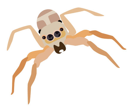 Vector illustration jumping spider isolated on white background
