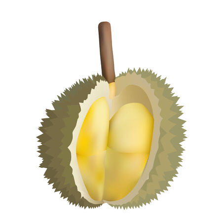 Vector illustration of peeled durian King of fruits isolated on white background Vector