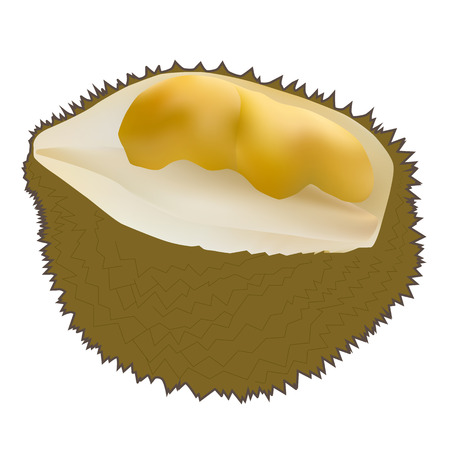 peeled: Vector illustration of peeled durian King of fruits isolated on white background