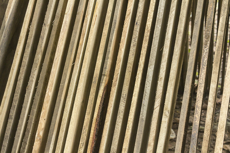 unprocessed: Unprocessed pine boards drying