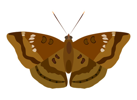 Vector illustration of moth isolated on white background