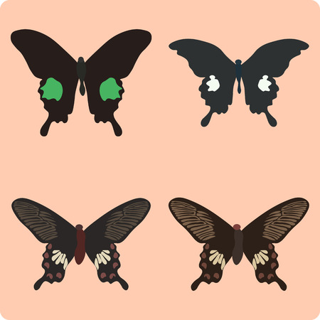 butterfly wings: Vector illustration of butterfly isolated on pink background