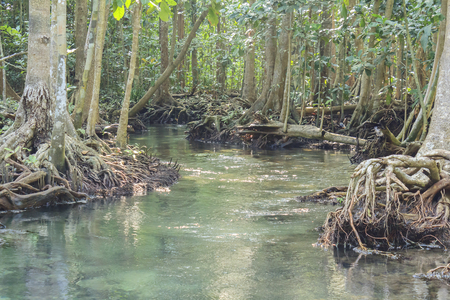 klong: Old mangrove forest inland waters Pa Phru Thapom Klong Song Nam, Krabi,Thailand Stock Photo
