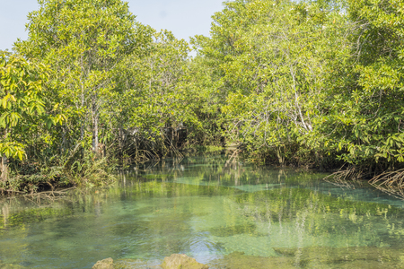 Old mangrove forest inland waters Pa Phru Thapom Klong Song Nam, Krabi,Thailand Stock Photo