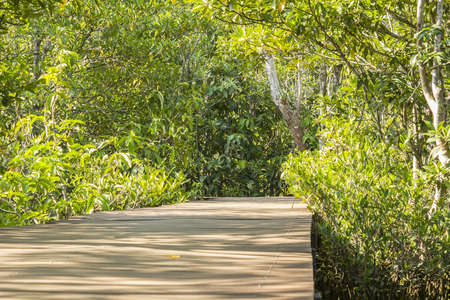 thapom: Wood bridge at old mangrove forest inland waters Pa Phru Thapom Klong Song Nam, Krabi,Thailand