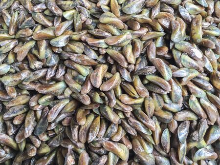 musculus: Raw fresh horse mussel or Musculus senhousia background at market in Thailand Stock Photo