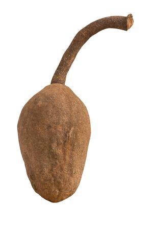 caoba: semillas de caoba aislado en el fondo blanco