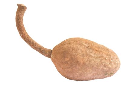 caoba: semillas de caoba aislado en fondo blanco con trazado de recorte