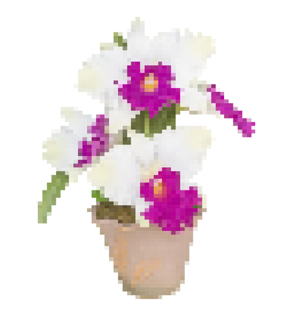 cattleya: Vector illustration pixel artificial white cattleya orchid flowers in flower pot isolated on white background