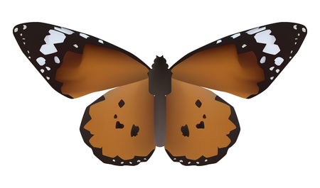 butterfly isolated: Vector illustration of butterfly with open wings in a top view