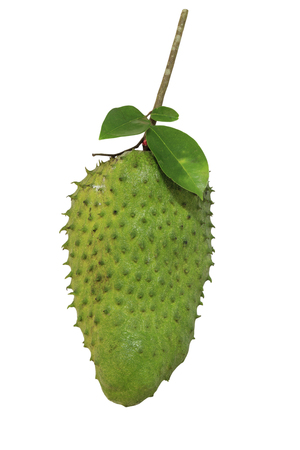 Soursop or Prickly Custard Apple (Annona muricata L.) fruit isolated on white background with clipping path