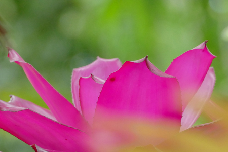 Bromeliad plant in tropical garden