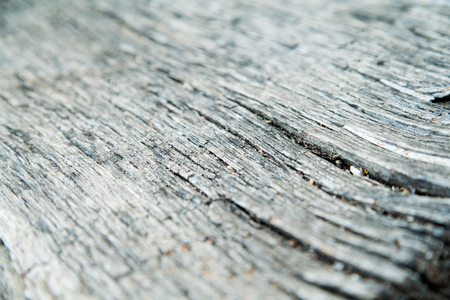 surface level: Old wood texture. Nature beauty