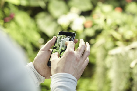 Close-up view mans hands using a mobile phone, taking photo of trees flowers and scaling on screen