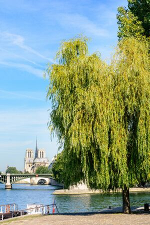 sully: Notre-Dame cathedral in Paris as seen from the Henri IV pier with a willow tree in the foreground, the river Seine and the Sully bridge.