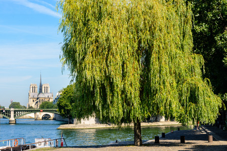 Notre-Dame cathedral in Paris as seen from the Henri IV pier with a weeping willow tree in the foreground, the river Seine and the Sully bridge. Stock Photo