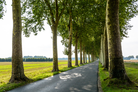 french way: Small narrow and straight tree lined road in the french countryside.
