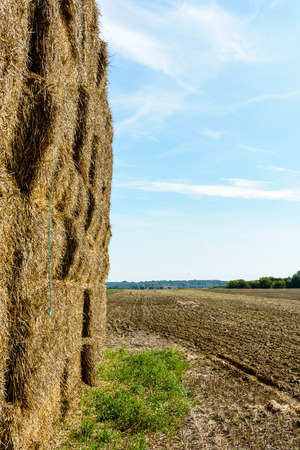 Rectangular bales of straw stacked in a field before being transported to shelter. Stock Photo