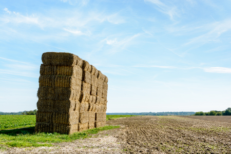neutral: Early in the fall, after harvesting the grain, the dry stalks of wheat are gathered into bales of straw that are then stacked in the field before being transported to shelter.