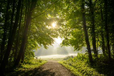 Early morning sunlight enlightening a misty grassland and bursting through the foliage of the wood. Stock Photo